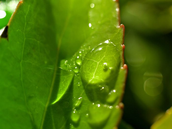 Plants leaves windows vista wallpapers green plants green leaves